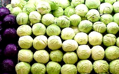 Storage of cabbage
