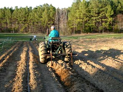planting potatoeswith a tractor